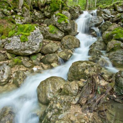 Parc Naturel Régional de La Chartreuse (Saint-Pierre-de-Chartreuse, France)
