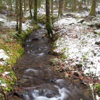 Réserve Naturelle du Lac Luitel @ Séchilienne (Auvergne-Rhône-Alpes, France)